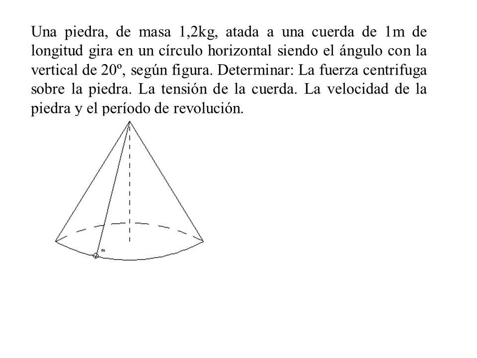 Una piedra, de masa 1,2kg, atada a una cuerda de 1m de longitud gira en un círculo horizontal siendo el ángulo con la vertical de 20º, según figura.