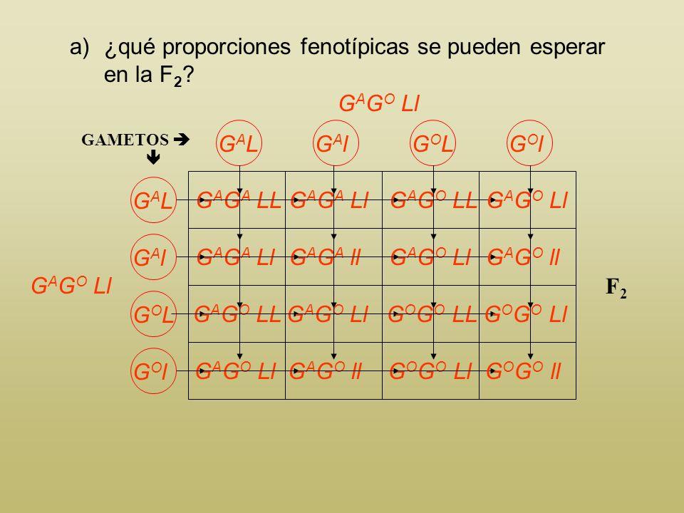 ¿qué proporciones fenotípicas se pueden esperar en la F2
