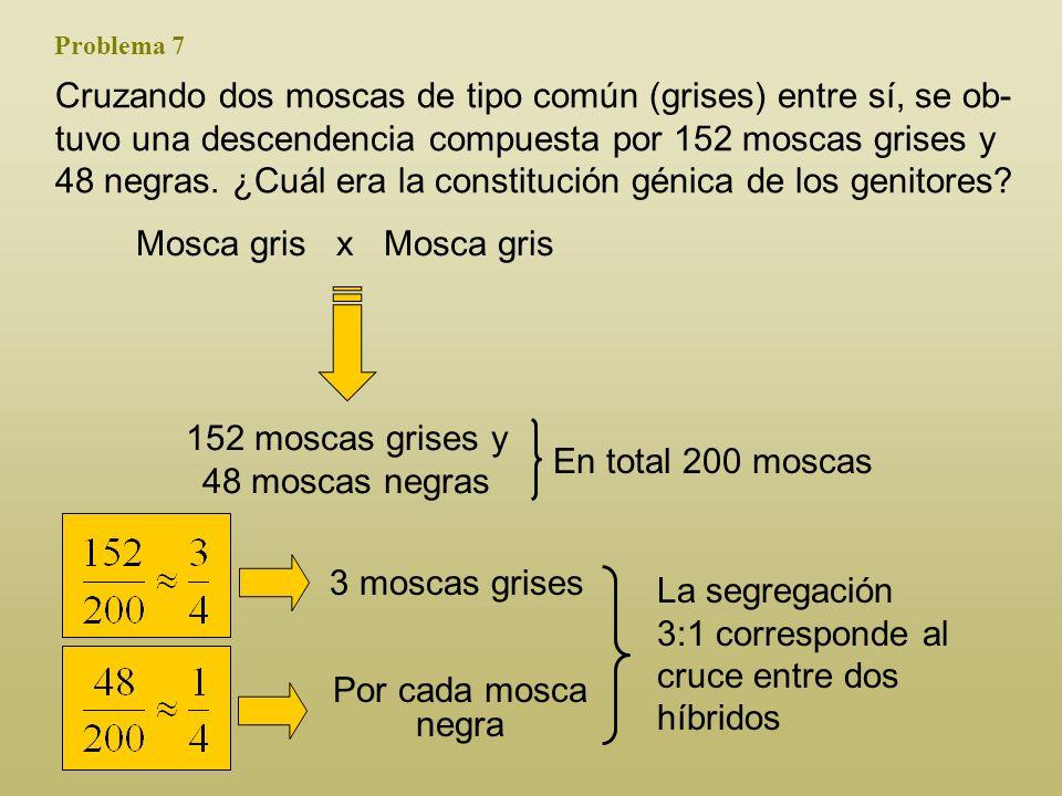 152 moscas grises y 48 moscas negras
