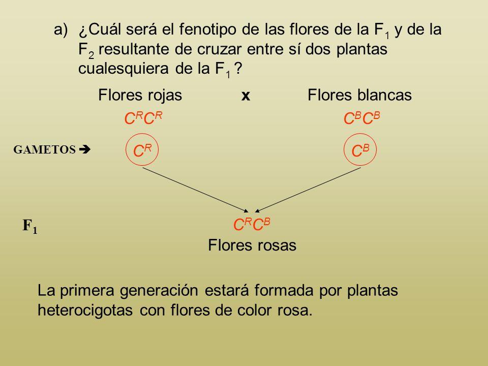 ¿Cuál será el fenotipo de las flores de la F1 y de la F2 resultante de cruzar entre sí dos plantas cualesquiera de la F1