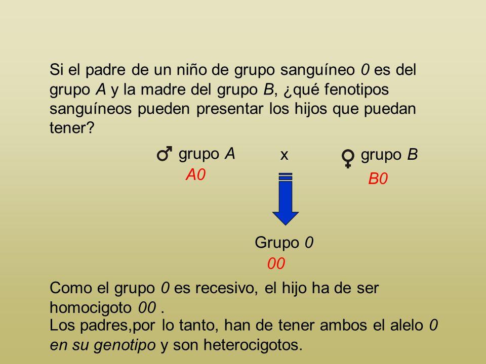 Si el padre de un niño de grupo sanguíneo 0 es del grupo A y la madre del grupo B, ¿qué fenotipos sanguíneos pueden presentar los hijos que puedan tener