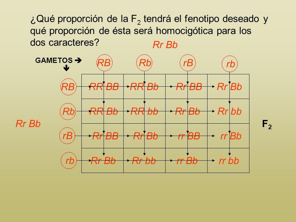 ¿Qué proporción de la F2 tendrá el fenotipo deseado y qué proporción de ésta será homocigótica para los dos caracteres