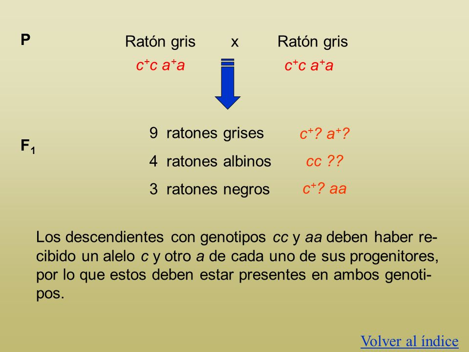 P Ratón gris x Ratón gris. c+c a+a. 9 ratones grises. 4 ratones albinos. 3 ratones negros.