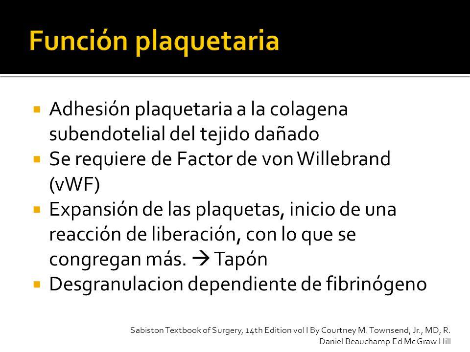 Función plaquetaria Adhesión plaquetaria a la colagena subendotelial del tejido dañado. Se requiere de Factor de von Willebrand (vWF)