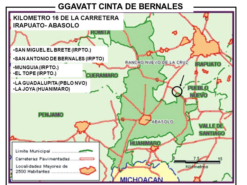 GGAVATT CINTA DE BERNALES