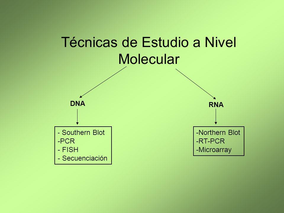 Técnicas de Estudio a Nivel Molecular