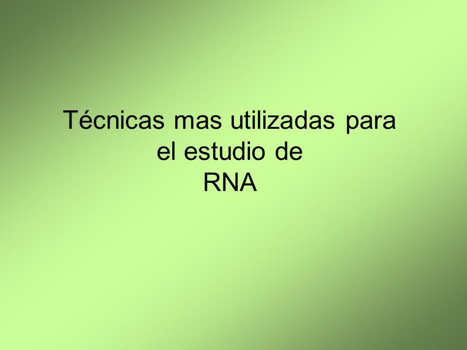Técnicas mas utilizadas para el estudio de RNA