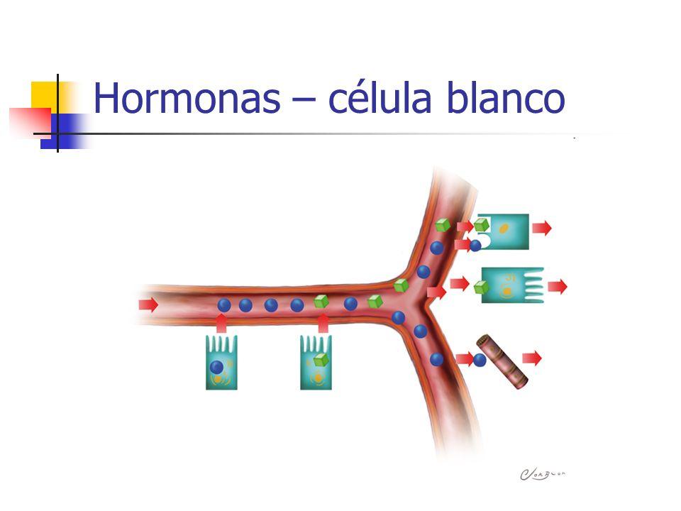 Hormonas – célula blanco