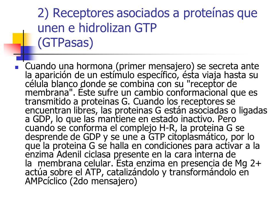 2) Receptores asociados a proteínas que unen e hidrolizan GTP (GTPasas)
