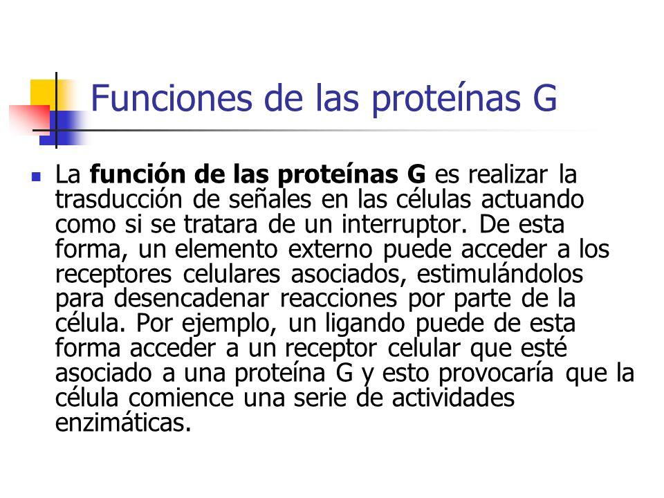 Funciones de las proteínas G