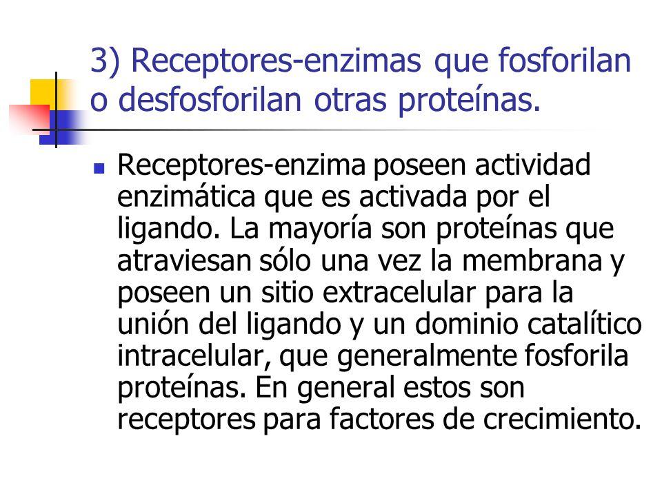 3) Receptores-enzimas que fosforilan o desfosforilan otras proteínas.