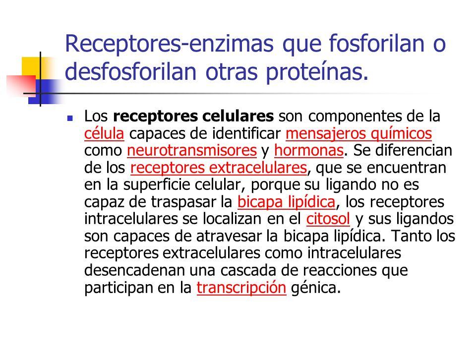 Receptores-enzimas que fosforilan o desfosforilan otras proteínas.