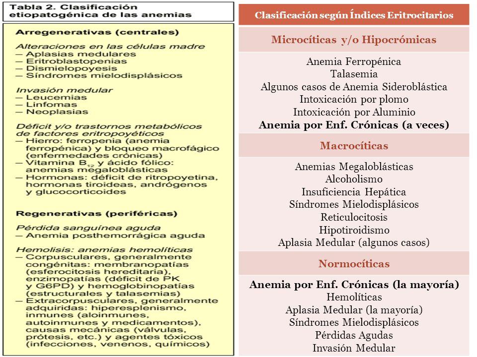 Microcíticas y/o Hipocrómicas Anemia Ferropénica Talasemia
