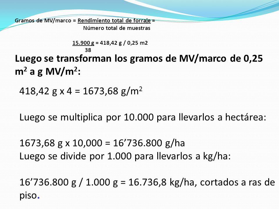 Luego se transforman los gramos de MV/marco de 0,25 m2 a g MV/m2: