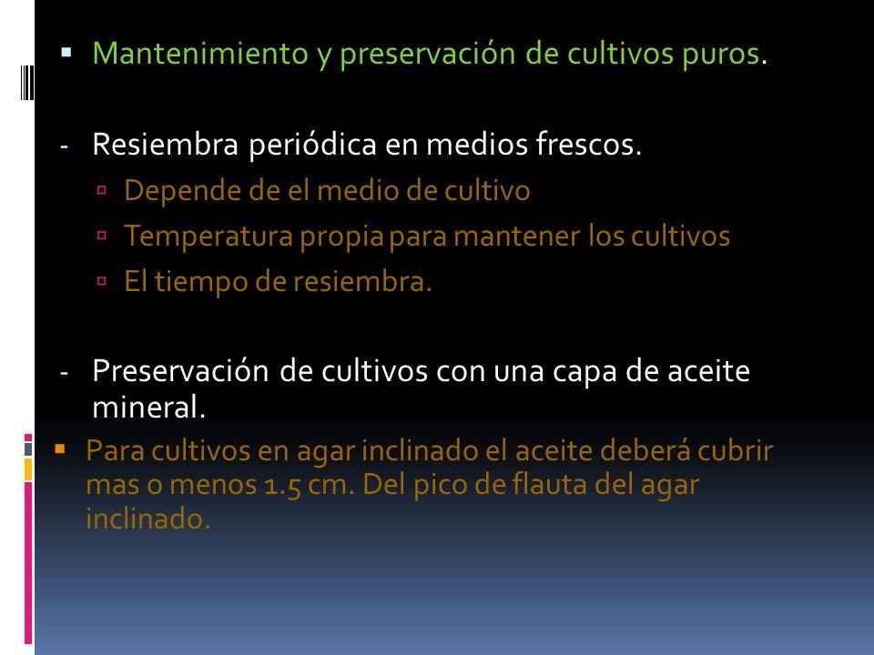 Mantenimiento y preservación de cultivos puros.