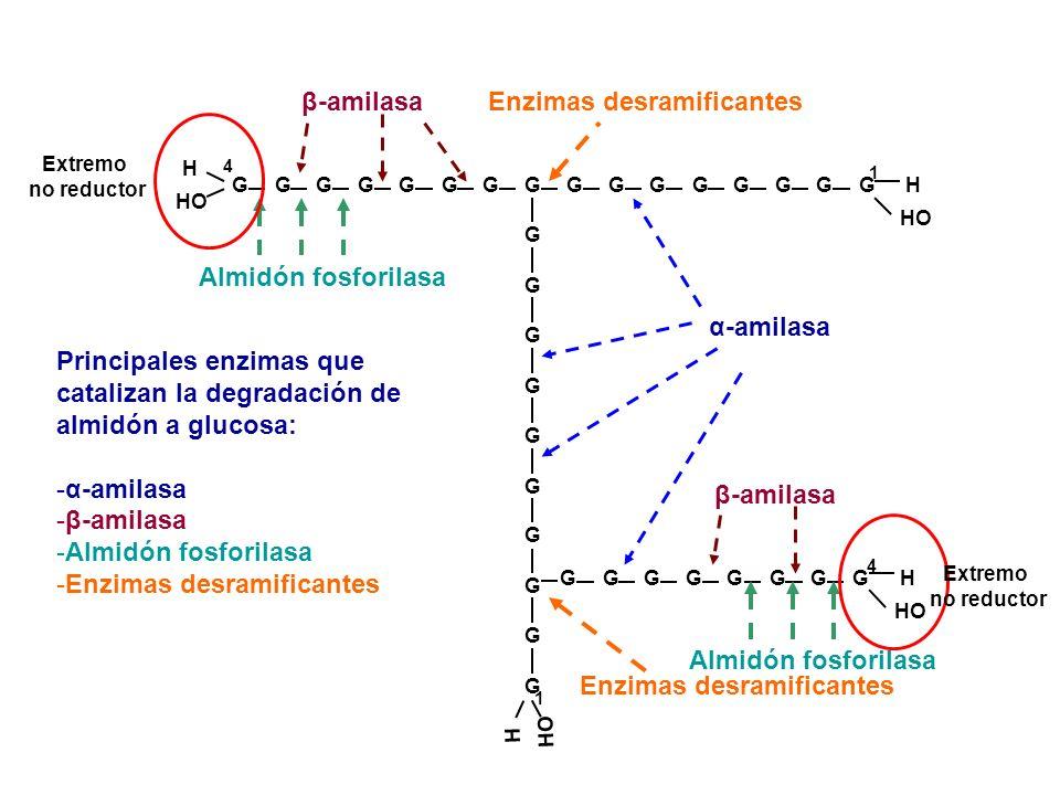 Enzimas desramificantes Enzimas desramificantes
