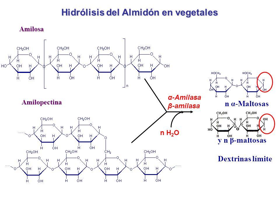 Hidrólisis del Almidón en vegetales