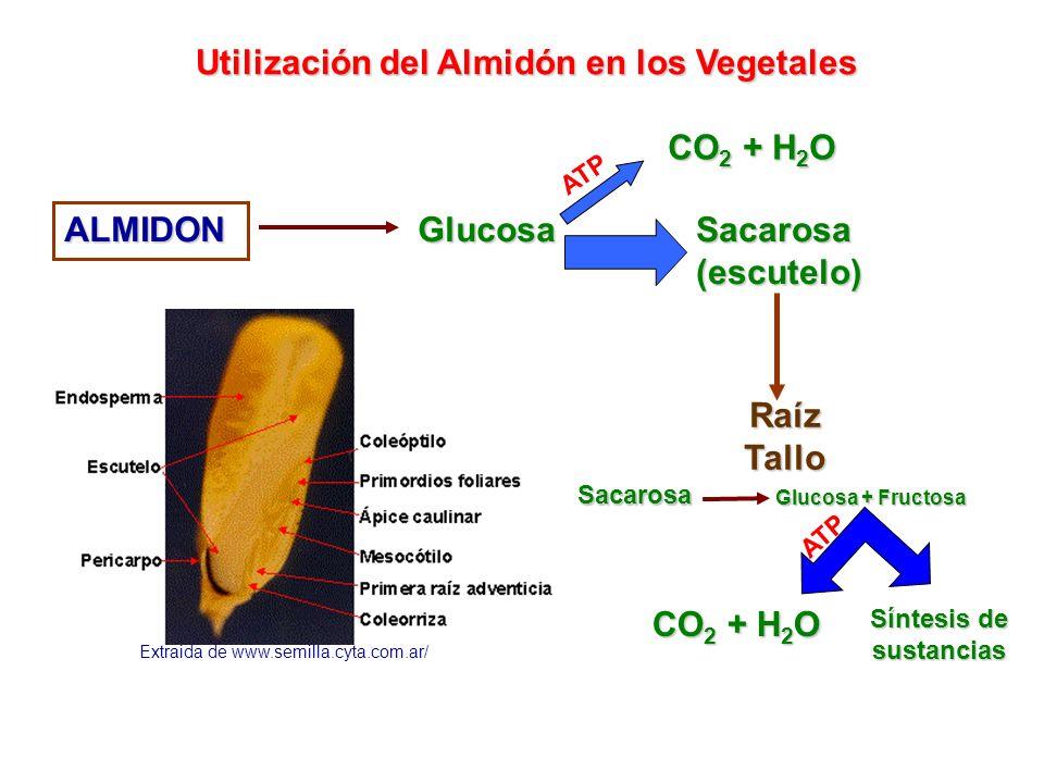 Síntesis de sustancias
