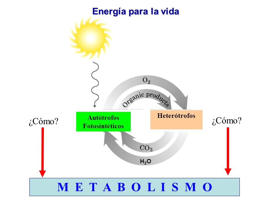 M E T A B O L I S M O Energía para la vida ¿Cómo ¿Cómo Heterótrofos