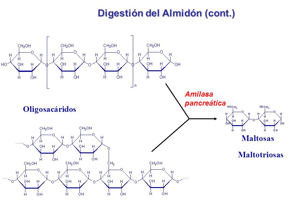 Digestión del Almidón (cont.)