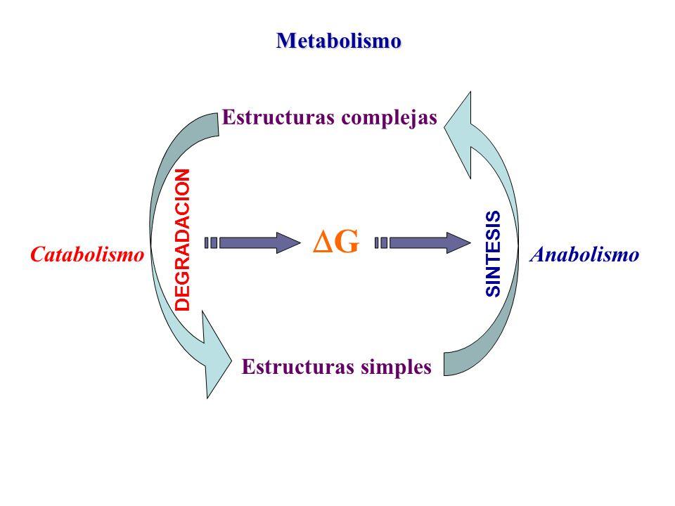 DG Metabolismo Estructuras complejas Estructuras simples Catabolismo