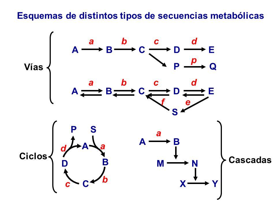 Esquemas de distintos tipos de secuencias metabólicas