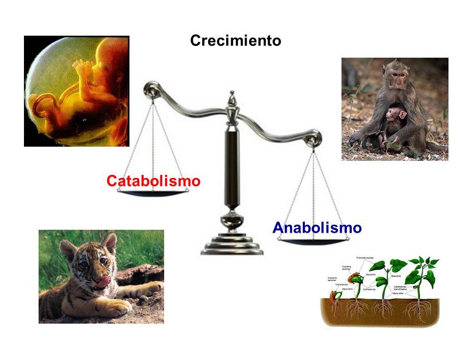 Crecimiento Catabolismo Anabolismo