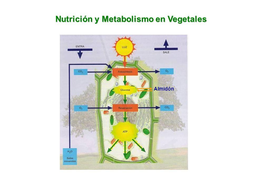 Nutrición y Metabolismo en Vegetales