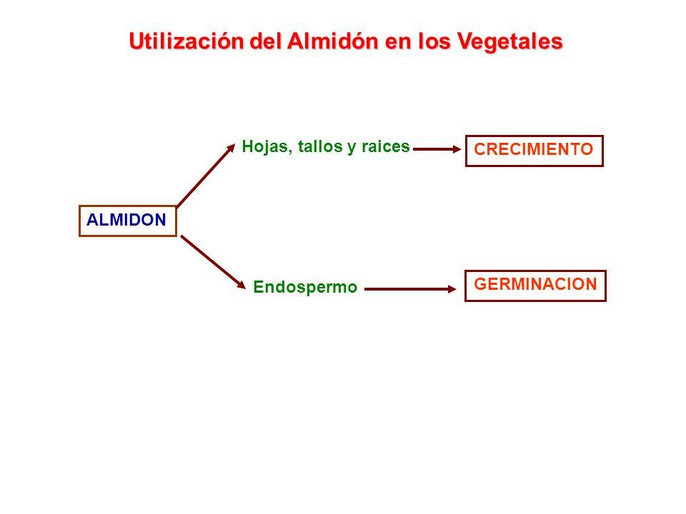 Utilización del Almidón en los Vegetales
