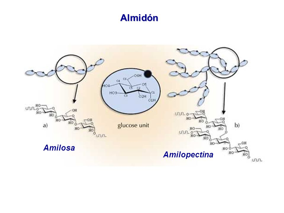 Almidón Amilosa Amilopectina