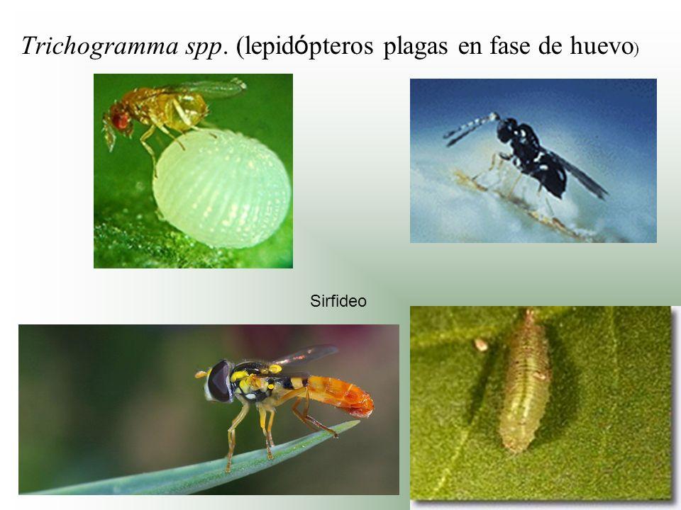 Trichogramma spp. (lepidópteros plagas en fase de huevo)