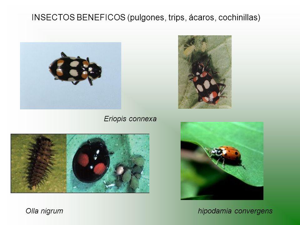 INSECTOS BENEFICOS (pulgones, trips, ácaros, cochinillas)