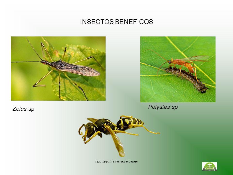 FCA - UNA, Dto. Protección Vegetal