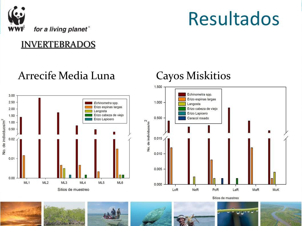 Resultados INVERTEBRADOS Arrecife Media Luna Cayos Miskitios