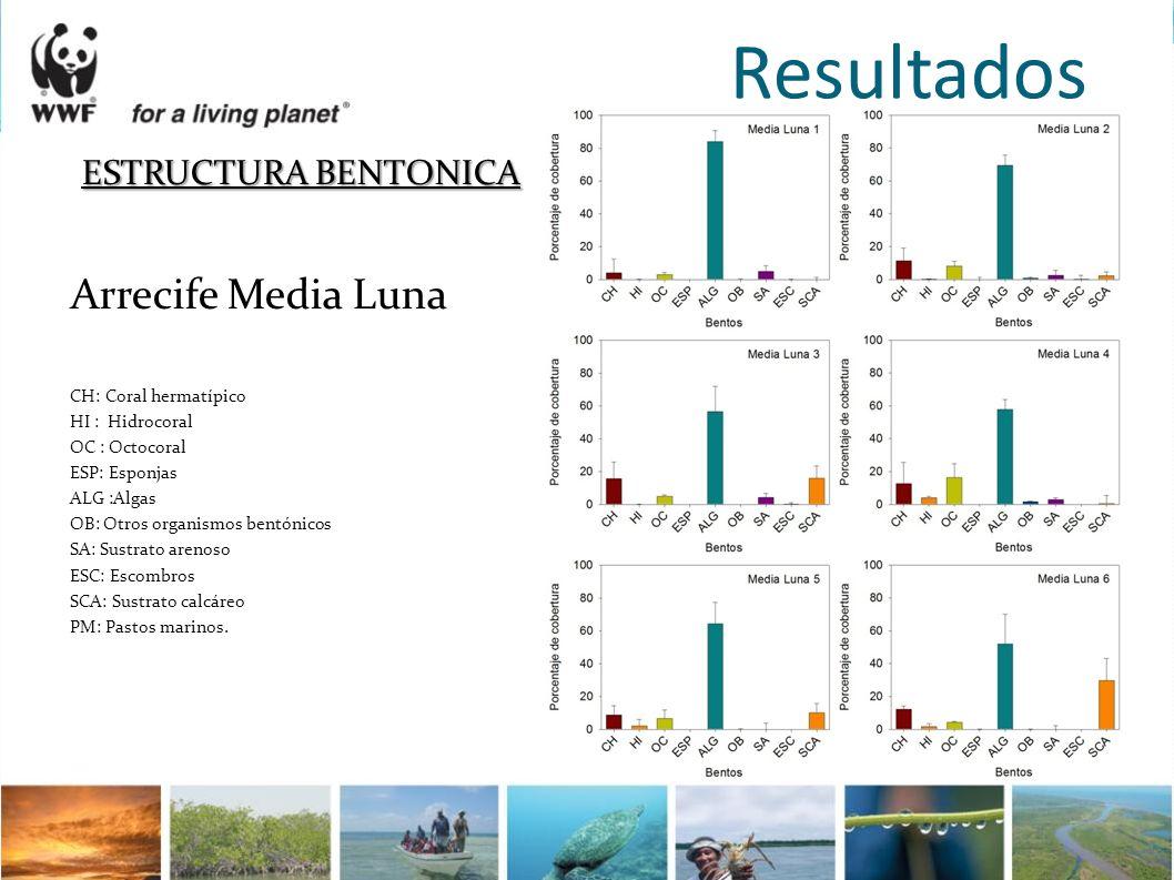 Resultados ESTRUCTURA BENTONICA Arrecife Media Luna
