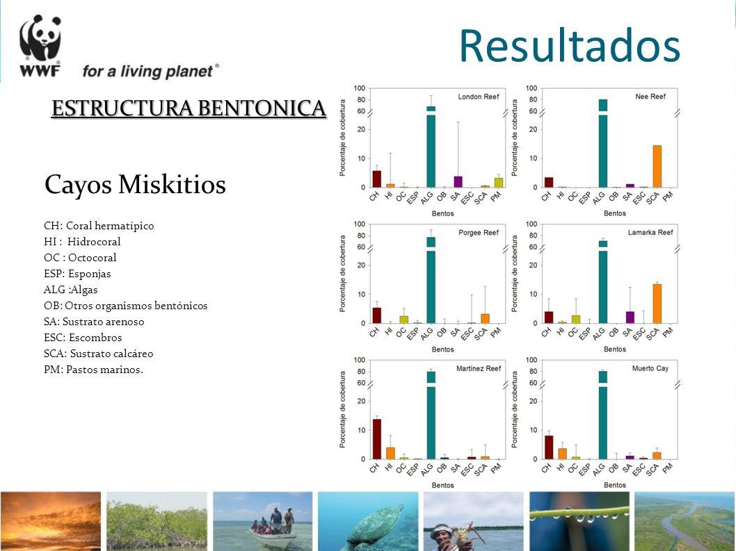 Resultados ESTRUCTURA BENTONICA Cayos Miskitios CH: Coral hermatípico