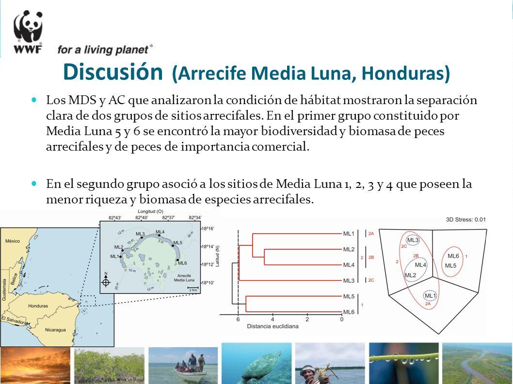 Discusión (Arrecife Media Luna, Honduras)
