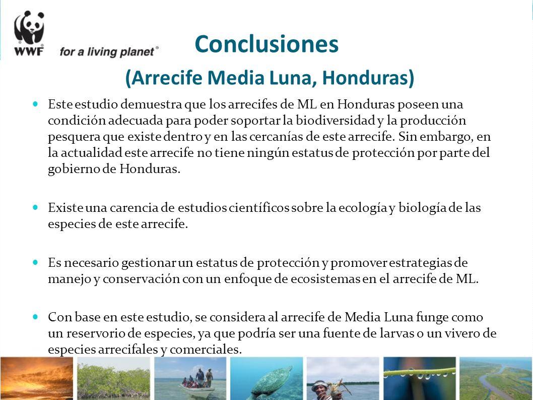 Conclusiones (Arrecife Media Luna, Honduras)