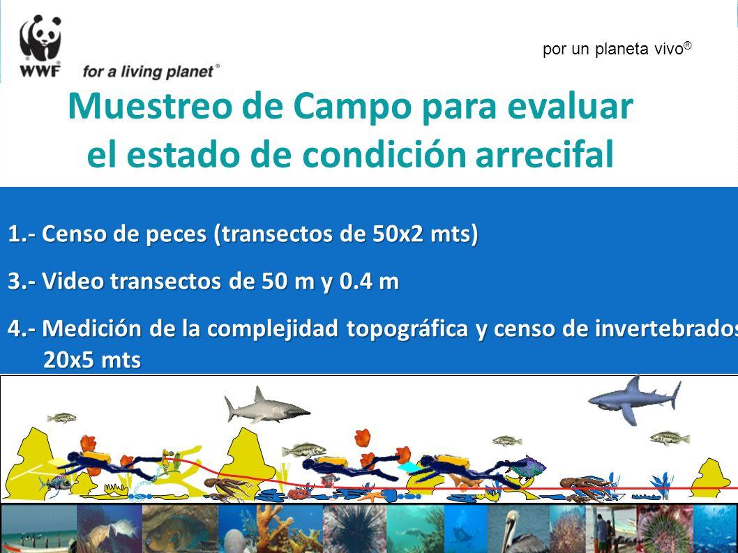 Muestreo de Campo para evaluar el estado de condición arrecifal