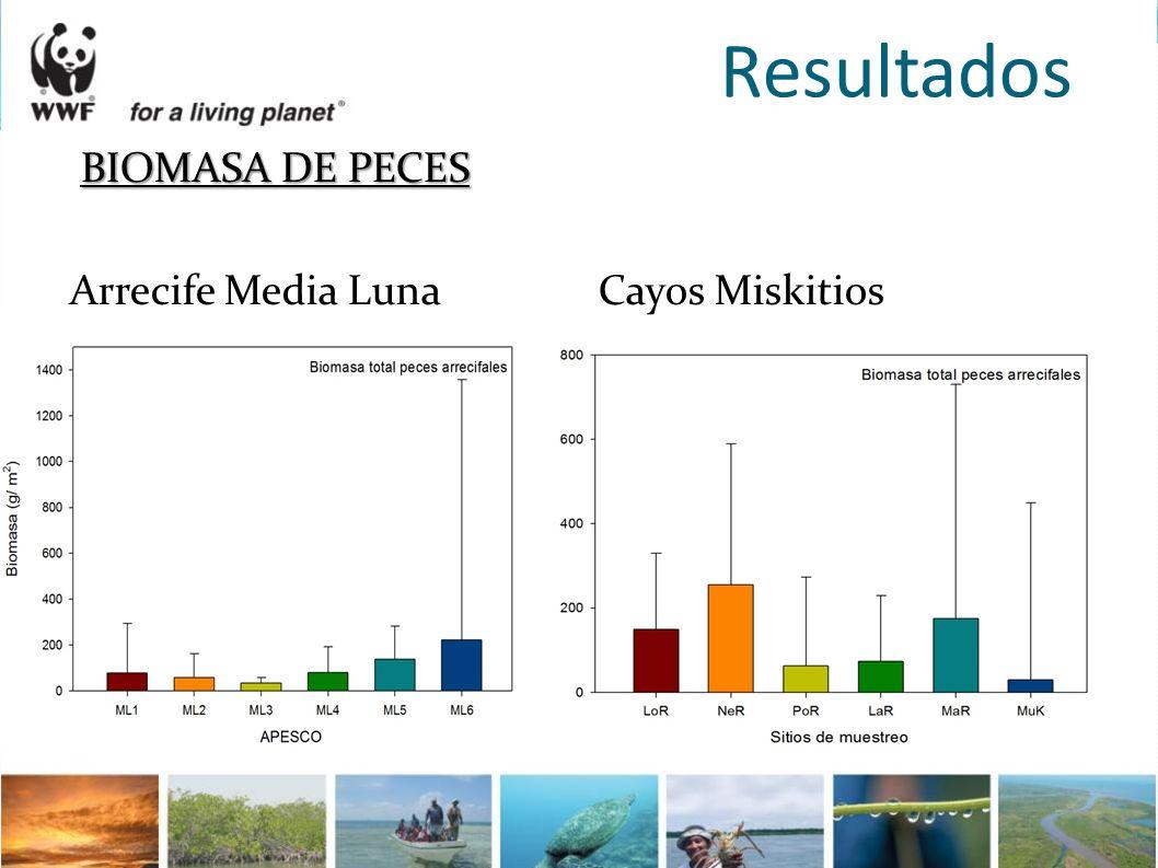 Resultados BIOMASA DE PECES Arrecife Media Luna Cayos Miskitios