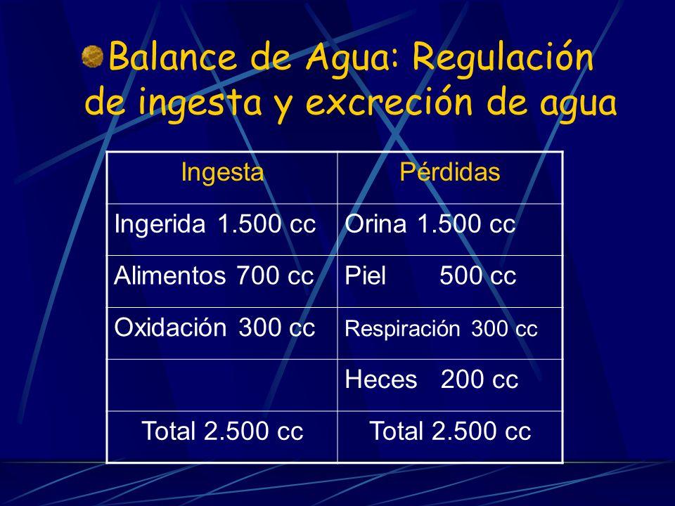 Balance de Agua: Regulación de ingesta y excreción de agua