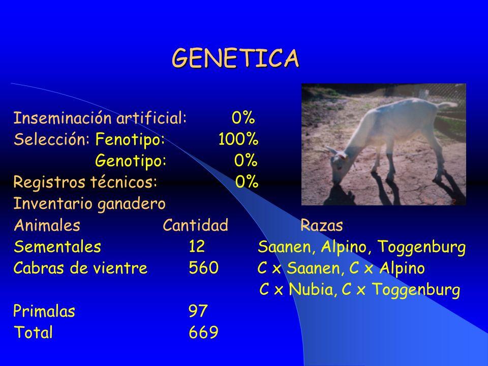 GENETICA Inseminación artificial: 0% Selección: Fenotipo: 100%