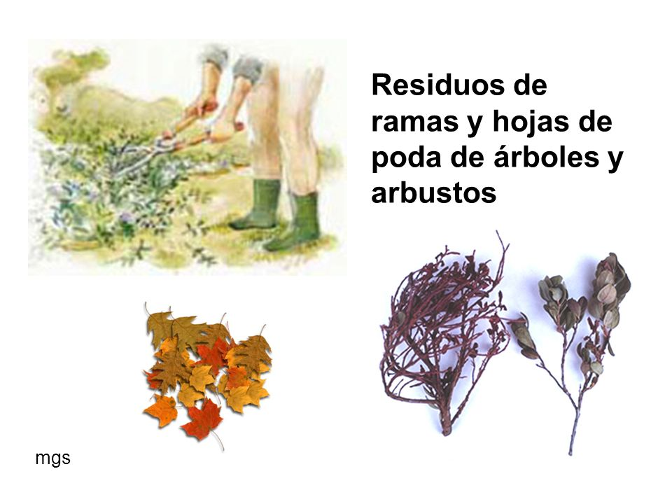Residuos de ramas y hojas de poda de árboles y arbustos