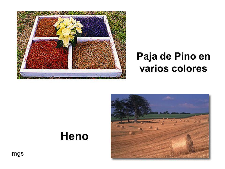 Paja de Pino en varios colores