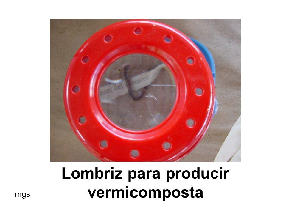 Lombriz para producir vermicomposta