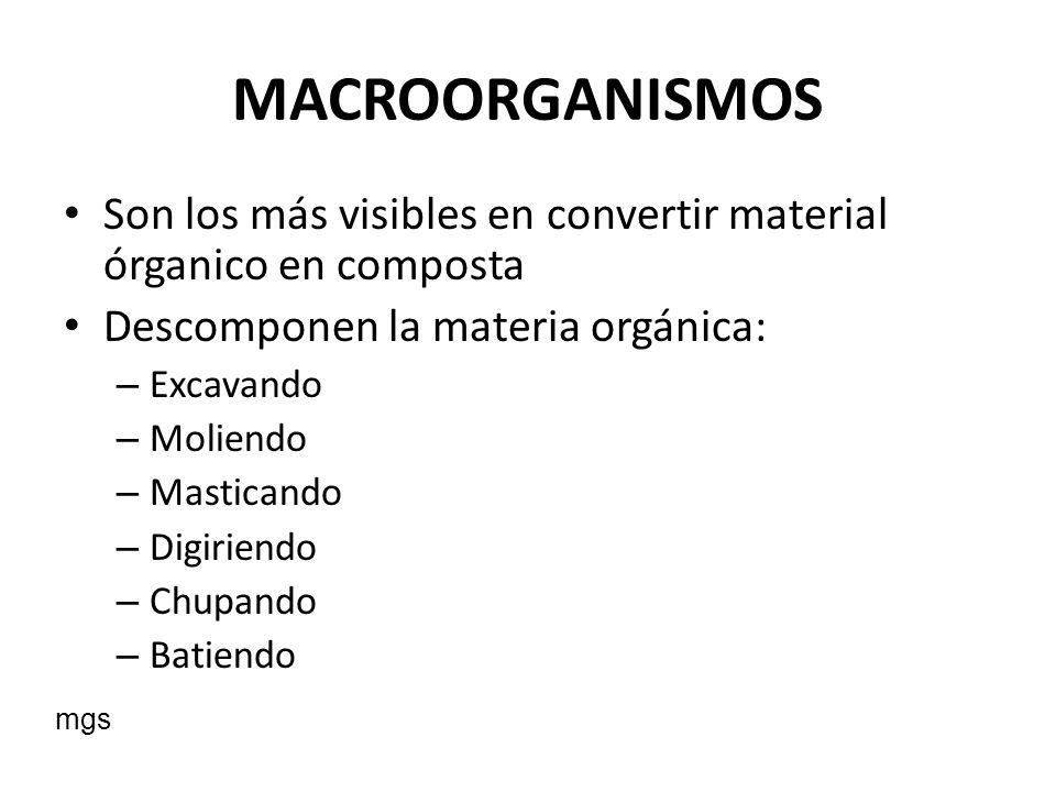 MACROORGANISMOS Son los más visibles en convertir material órganico en composta. Descomponen la materia orgánica:
