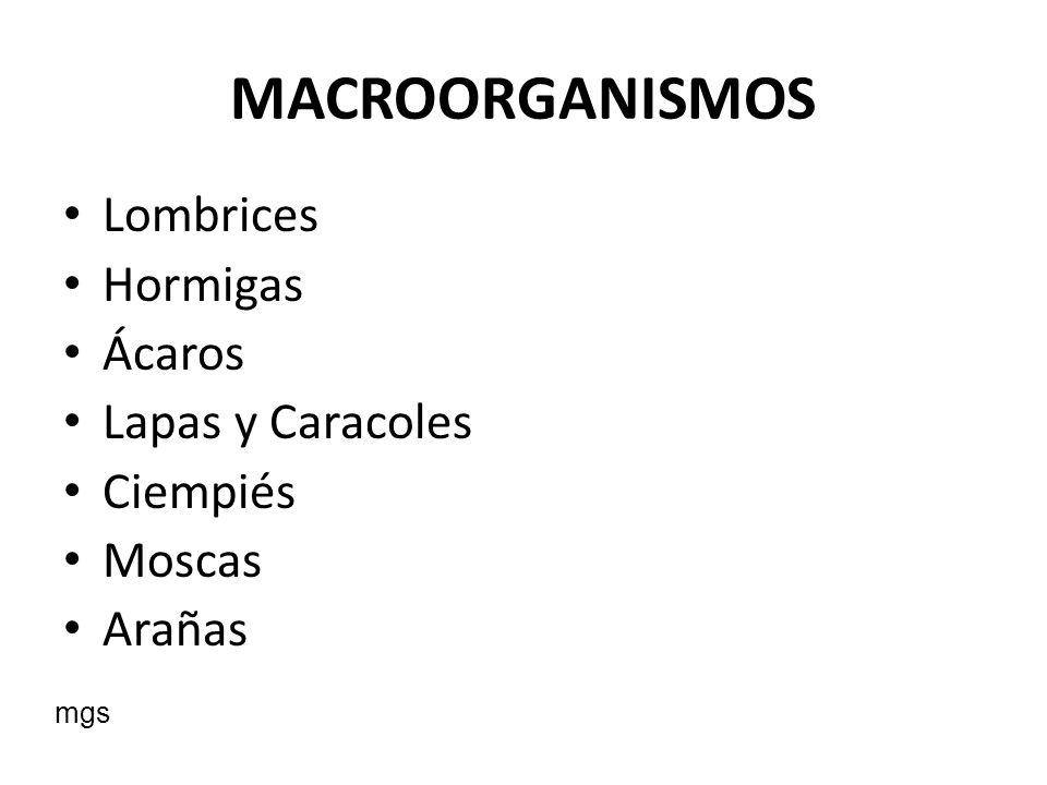 MACROORGANISMOS Lombrices Hormigas Ácaros Lapas y Caracoles Ciempiés