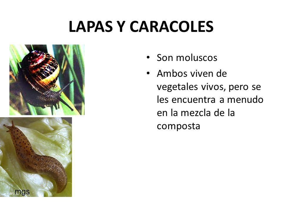 LAPAS Y CARACOLES Son moluscos