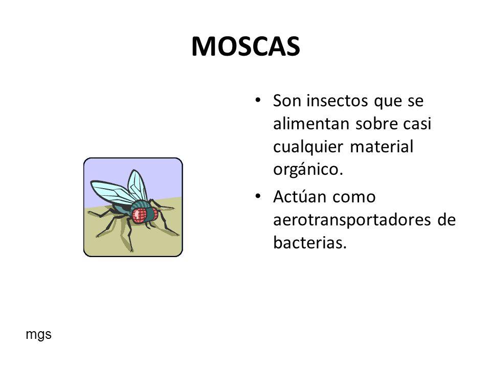 MOSCAS Son insectos que se alimentan sobre casi cualquier material orgánico. Actúan como aerotransportadores de bacterias.