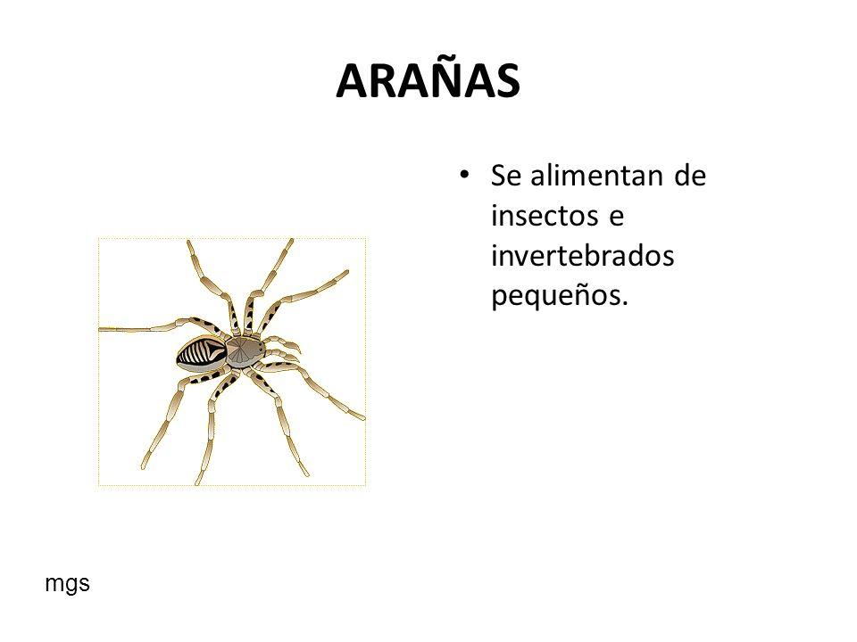 ARAÑAS Se alimentan de insectos e invertebrados pequeños. mgs